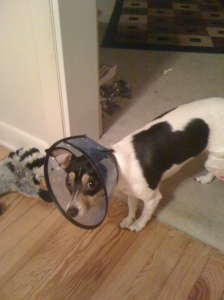 maddie in a cone